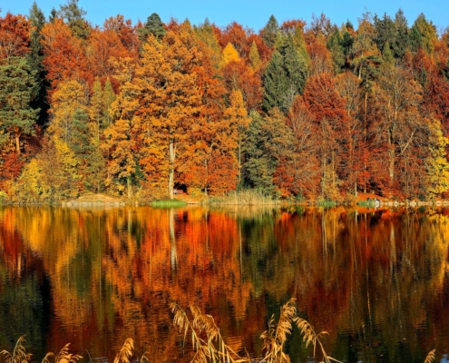 best places to see foliage in maine